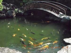 Staw rybny po3 miesiącach odinstalacji HydroFLOW